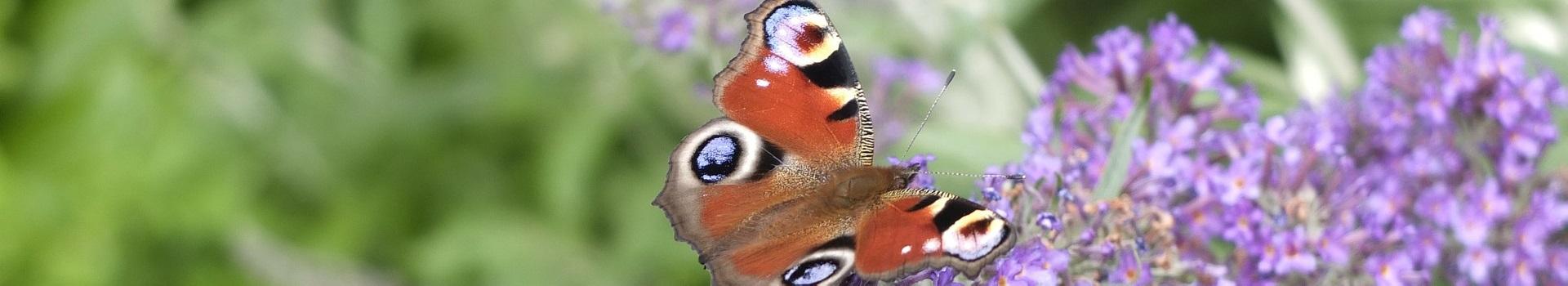 butterfly-191606_1920