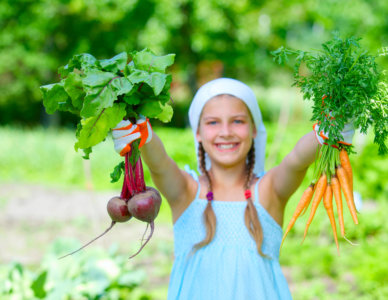 Vegetable garden - little gardener with bunch of organic carrots and beets
