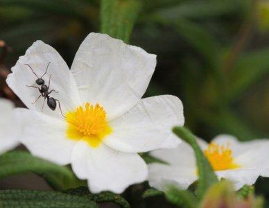 La società delle formiche e la vita del formicaio