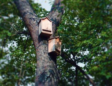 I pipistrelli divorano le zanzare, averli  come vicini di casa è un vantaggio