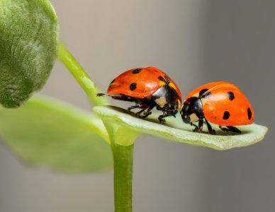 Insetti utili e insetti dannosi, tutti comunque affascinanti