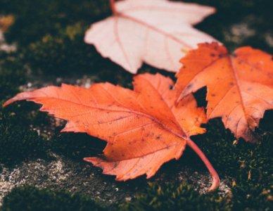 L'alternarsi delle stagioni e la natura che cambia