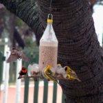 weaver-birds-1352032_1280